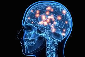 Picture for category Brain Health