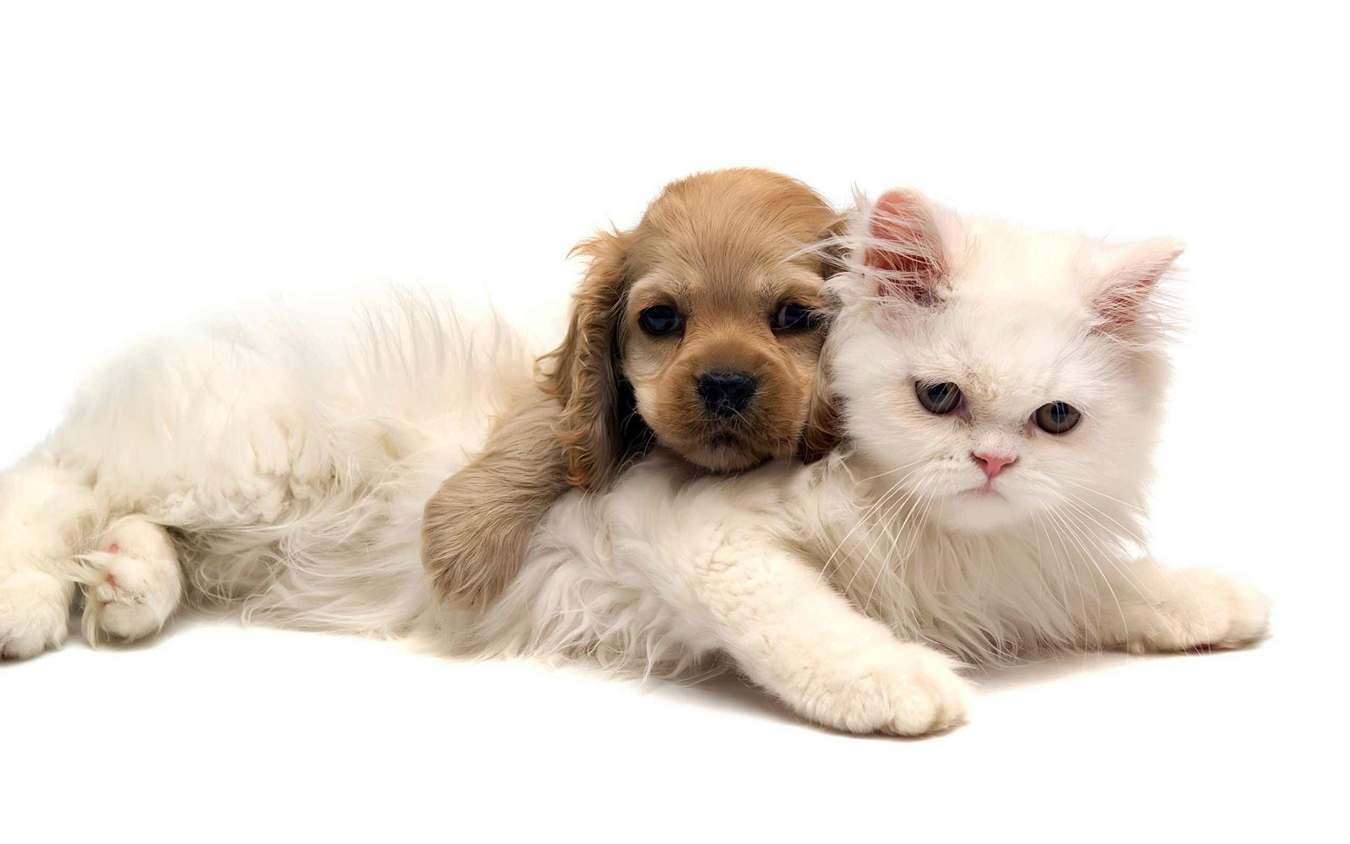 Picture for category Pet Health