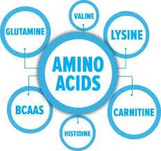 Picture for category Amino Acids