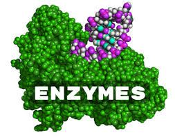 Picture for category Enzymes
