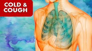Picture for category Cough & Cold