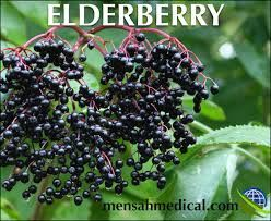 Picture for category Elderberry